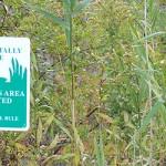 Environmental_EcologyWetlands-618x250